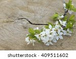 Flowering Twig Of Plum Tree On...