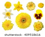 Collection Of Yellow Flowers...