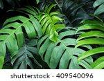 Group Monstera Leaf