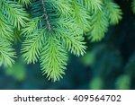 pine branch close up | Shutterstock . vector #409564702