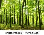 a rural road through a forest... | Shutterstock . vector #40965235