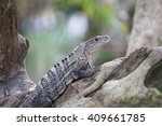 a view of the iguana in the... | Shutterstock . vector #409661785