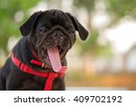 funny face of pug dog with... | Shutterstock . vector #409702192
