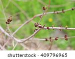 flowers  buds and shoots on... | Shutterstock . vector #409796965