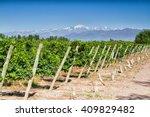 Vineyards. Volcano Aconcagua...