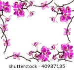 orchid isolated on white... | Shutterstock . vector #40987135