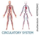 human circulatory system.... | Shutterstock .eps vector #409982842