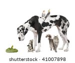 Stock photo group of pets in front of white background studio shot 41007898