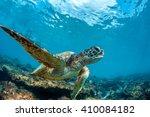 underwater marine wildlife... | Shutterstock . vector #410084182