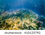 Small photo of Acanthurus coeruleus: Shoal of Atlantic Blue Tang Surgeon fish underwater in the Florida Keys