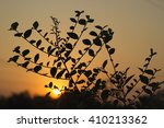 the leaf that silhouetted... | Shutterstock . vector #410213362