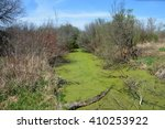 Creek covered with algae