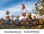 a branch of the apple on a... | Shutterstock . vector #410259442