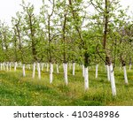 young garden bloomed spring.... | Shutterstock . vector #410348986