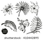 vector illustration of tropical ... | Shutterstock .eps vector #410442895