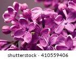 purple lilac closeup | Shutterstock . vector #410559406
