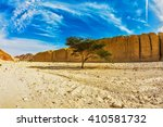 Small photo of Tree Desert Acacia tortilis in the Black Canyon. The stone desert in mountains of Eilat, Israel