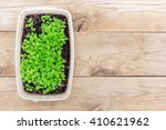 seedlings in a box on the old... | Shutterstock . vector #410621962