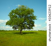 old oak tree standing alone in... | Shutterstock . vector #410623912