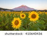 Sunflower Field And Mountain...