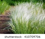 feather grass found as... | Shutterstock . vector #410709706
