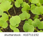 young rucola laves  | Shutterstock . vector #410711152