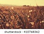 field of grass close up photo....   Shutterstock . vector #410768362