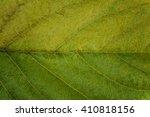 close up leaf texture | Shutterstock . vector #410818156