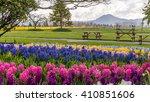 Rainbow Flowers Hyacinths...