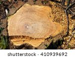 Tree Stump With Growth Rings