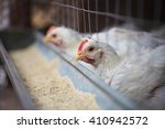 Poultry Inf Hennery Cage In...