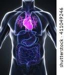 human heart anatomy. 3d... | Shutterstock . vector #411049246