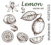 hand drawn vintage lemon plant. ... | Shutterstock .eps vector #411071212