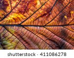 dry tree leaf  background | Shutterstock . vector #411086278