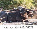 african buffalo  syncerus... | Shutterstock . vector #411150592