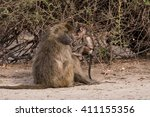 baboons have family social time ... | Shutterstock . vector #411155356