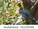 giant kingfisher  megaceryle... | Shutterstock . vector #411155566