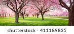 panorama of cherry blossom... | Shutterstock . vector #411189835