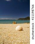 Small photo of sea shell on sand in abel tasman