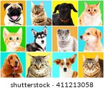 Dogs And Cats Portraits On...