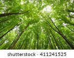 a beech tree forest in germany | Shutterstock . vector #411241525