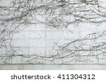 pattern of dry ivy liana on the ... | Shutterstock . vector #411304312