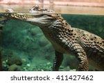 Large Alligator Head Underwate...