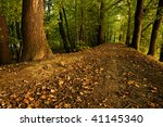 Autumn scenery of forest path - stock photo