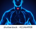human thyroid gland anatomy. 3d ... | Shutterstock . vector #411464908