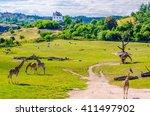 a group of giraffes  outdoor... | Shutterstock . vector #411497902