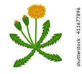 dandelion simple flowering... | Shutterstock .eps vector #411677896