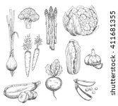 fresh vegetables sketch with... | Shutterstock .eps vector #411681355