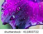 purple flower petals with water ... | Shutterstock . vector #411803722