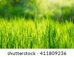 green grass fields  suitable... | Shutterstock . vector #411809236